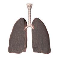 Les poumons des fumeurs