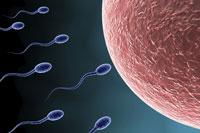Procréation et gestation pour autrui